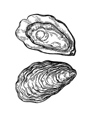 Illustration pour Oysters ink sketch. - image libre de droit