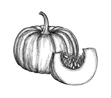 Ilustración de Ink sketch of pumpkin isolated on white background. Hand drawn vector illustration. Retro style. - Imagen libre de derechos