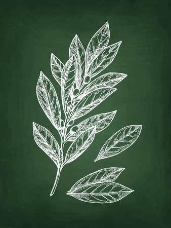 Illustration pour Bay laurel branch and leaves. Chalk sketch on blackboard background. Hand drawn vector illustration. Retro style. - image libre de droit