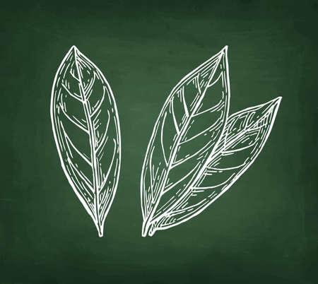 Ilustración de Bay leaves,  Hand drawn, Chalk sketch on blackboard background. - Imagen libre de derechos