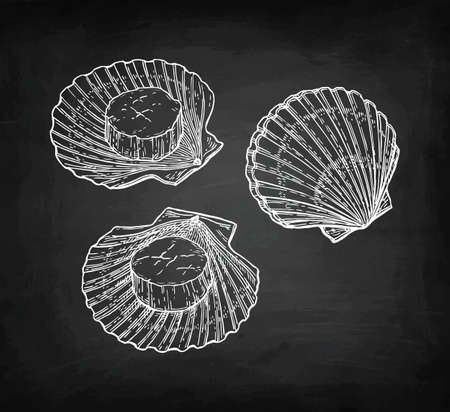 Illustration pour Chalk sketch of scallops - image libre de droit