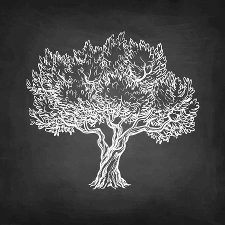 Illustration pour Chalk sketch of olive tree. - image libre de droit
