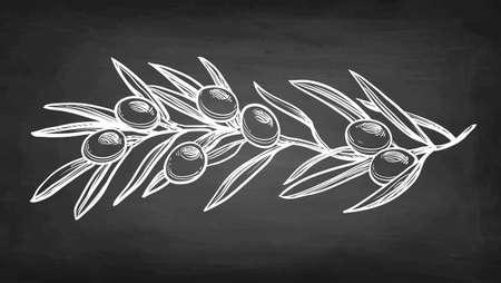 Illustration pour Chalk sketch of olive branch. - image libre de droit