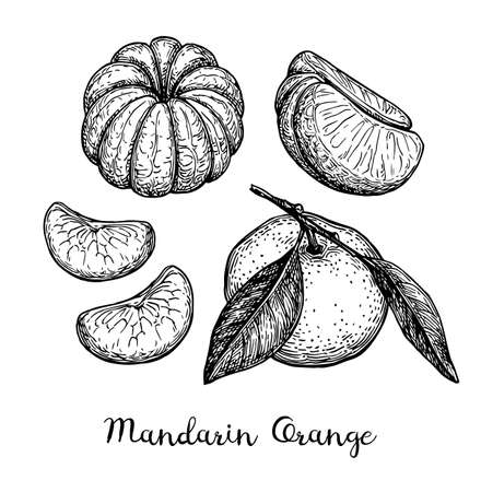 Ilustración de Mandarin orange set. Ink sketch isolated on white background. Hand drawn vector illustration. Retro style. - Imagen libre de derechos