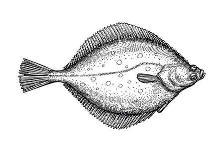 Ilustración de Ink sketch of flounder. - Imagen libre de derechos