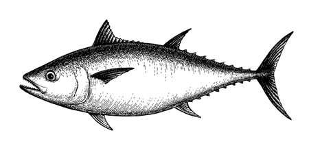 Illustration for Ink sketch of tuna. - Royalty Free Image