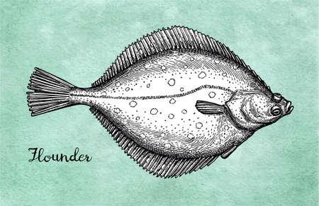 Ilustración de Flatfish. Ink sketch of flounder. - Imagen libre de derechos