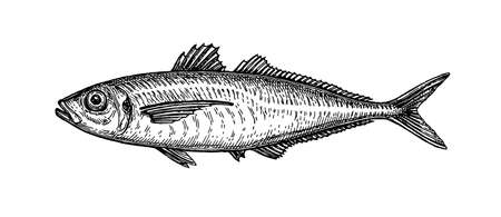 Illustration for Ink sketch of horse mackerel. - Royalty Free Image