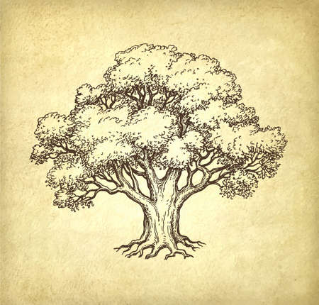 Illustration for Ink sketch of oak tree. Hand drawn vector illustration on old paper background. Retro style. - Royalty Free Image