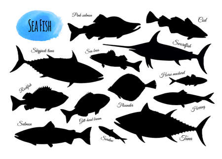 Illustration pour Fish silhouettes. Big set isolated on white background. Hand drawn vector illustration - image libre de droit