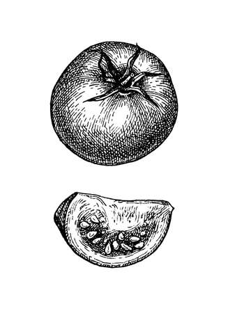 Illustration for Ink sketch of tomato isolated on white background. Hand drawn vector illustration. Retro style. - Royalty Free Image