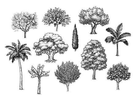 Illustration pour Ink sketch of trees. - image libre de droit