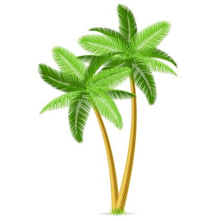 Illustration pour Tropical palm trees - image libre de droit