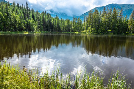 Foto de Mountain lake in the forest, Tatra Mountains, National Park in Poland, summer landscape - Imagen libre de derechos