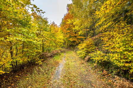 Photo for Road in autumn forest, fall landscape - Royalty Free Image