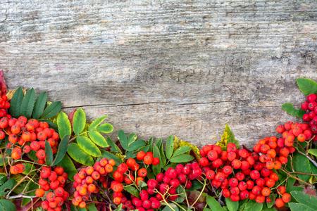 Photo pour Red rowan frame, autumn background, text space - image libre de droit