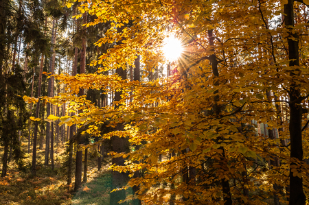 Photo for Beautiful autumn forest. - Royalty Free Image