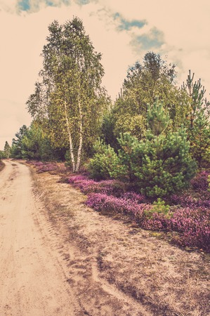 Photo for Countryside landscape with heather flowers in the forest at the road - Royalty Free Image