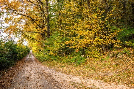 Photo for Rural road in the forest, nature in autumn, landscape - Royalty Free Image