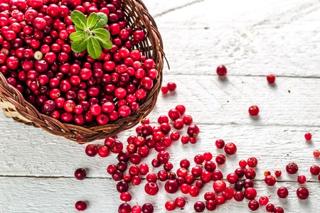 Photo for Basket of fresh cranberry on wooden table, red berries also called cowberry or lingonberry on white background - Royalty Free Image
