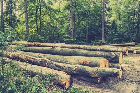 Photo for Pile of wood in the forest with green background of deciduous trees, vintage photo. - Royalty Free Image