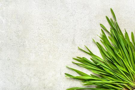 Photo pour Fresh green wheat grass, detox superfood concept - image libre de droit