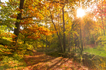 Photo for Forest in autumn, landscape with sunset. Sun shining through trees. - Royalty Free Image
