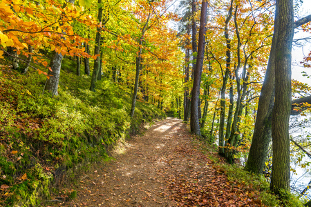 Photo for Autumn forest scenery with path and trees - Royalty Free Image