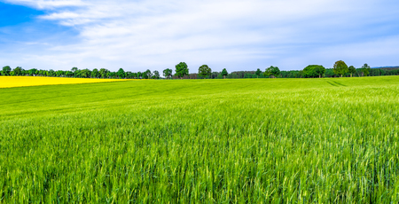 Foto de Green farm, panoramic view of farmland, crop of wheat on field, spring landscape - Imagen libre de derechos