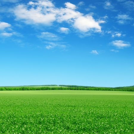 Photo pour green field and blue sky with light clouds - image libre de droit