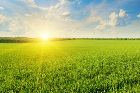 Photo pour field, sunrise and blue sky - image libre de droit