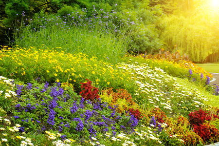 Foto de beautiful background of bright garden flowers - Imagen libre de derechos