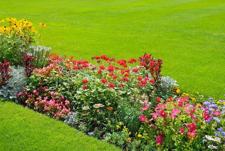 Photo pour beautiful background of bright garden flowers - image libre de droit