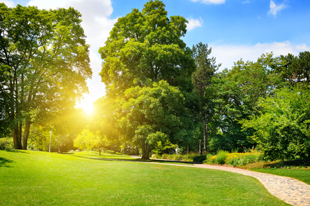 Photo pour summer park with beautiful green lawns - image libre de droit