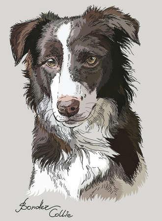 Illustration pour Border collie vector hand drawing illustration in different color on grey background - image libre de droit