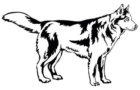 Ilustración de Decorative portrait of standing in profile dog Siberian husky, vector isolated illustration in black color on white background - Imagen libre de derechos