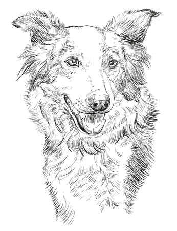 Illustration for  Border collie vector isolated hand drawing illustration in black color on white background - Royalty Free Image