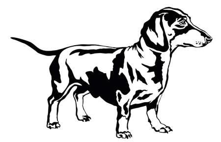 Ilustración de Decorative portrait of standing in profile dog dachshund, vector isolated illustration in black color on white background - Imagen libre de derechos