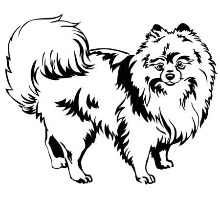 Ilustración de Decorative portrait of standing in profile dog breed Spitz (Pomeranian), vector isolated illustration in black color on white background - Imagen libre de derechos