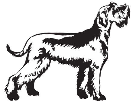 Illustration for Decorative portrait of standing in profile Giant Schnauzer, vector isolated illustration in black color on white background - Royalty Free Image