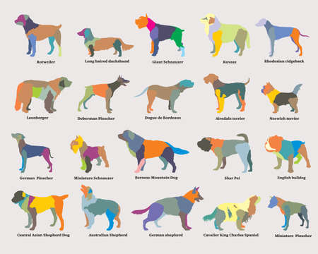 Illustration pour Vector set of colorful mosaic isolated different breeds dogs silhouettes on grey backround - image libre de droit