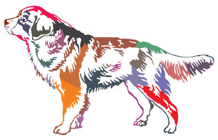 Illustration pour Colorful decorative portrait of standing in profile Bernese Mountain Dog, vector isolated illustration on white background - image libre de droit