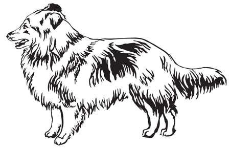 Ilustración de Decorative portrait of standing in profile Sheltie. - Imagen libre de derechos