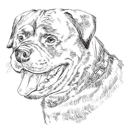 Illustration pour Rottweiler vector hand drawing monochrome illustration isolated on white background - image libre de droit