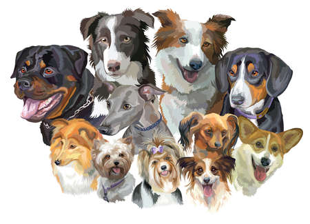 Illustration pour Set of colorful portraits of dog breeds isolated on white backdrop. - image libre de droit