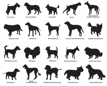 Illustration for Vector set of different breeds dogs silhouettes isolated in black color on white background. Part 4 - Royalty Free Image