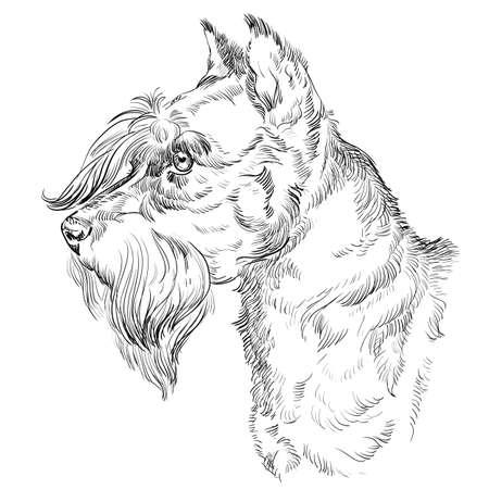 Illustrazione per Miniature Schnauzer dog vector hand drawing illustration in black color isolated on white background. - Immagini Royalty Free