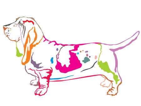 Ilustración de Colorful contour decorative portrait of standing in profile dog Basset Hound, vector isolated illustration on white background - Imagen libre de derechos