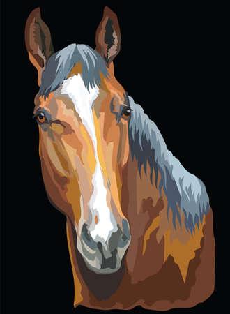 Illustration pour Colored portrait of Trakehner horse. Horse head isolated vector illustration on black background - image libre de droit