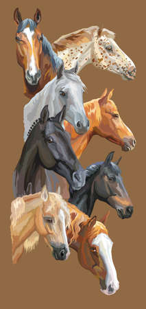 Illustration pour Vertical postcard with portraits of horses breeds (Trakehner horse, Welsh Pony, Orlov Trotter, Arabian horse, Appaloosa horse) isolated on brown background. Vector colorful illustration. - image libre de droit